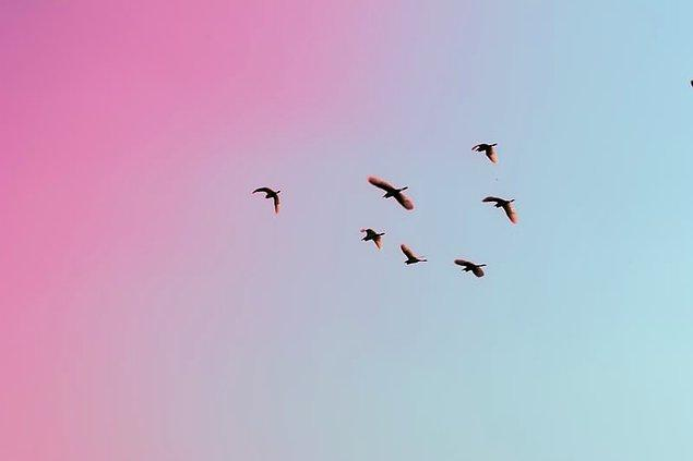 """14. """"Sabahları öten kuşların sesi tahmin ettiğinizden çok daha yüksek..."""""""