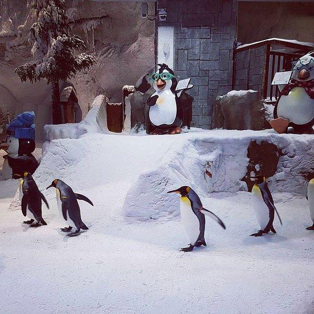 26. Daha önce bahsettiğimiz kapalı mekanda bulunan kayak merkezinde penguenler bile yaşıyor.