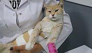 Denizli'de Yaralı Bulunan Kedi Cinsel Saldırıya Uğramış!