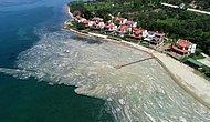 """Bakan Açıkladı: Deniz Salyalarına Karşı """"Acil Eylem Planı"""" Hazırlanıyor"""