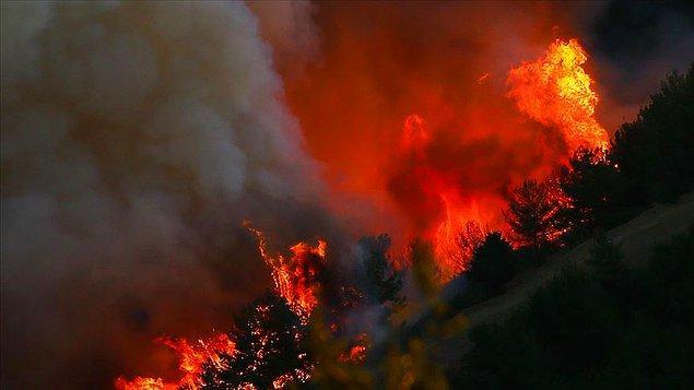 Türkiye'de son 10 yılın orman yangını istatistikleri