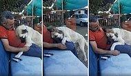 Kendini Sevdirmek İçin İnsan Dostunun Üzerine Yatan Köpeğin İçinizi Isıtacak Görüntüleri
