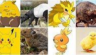 Ormanda Gezerken Pokemonların Gerçek Hali ile Karşılaşabiliriz