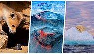 2021 BigPicture Doğal Dünya Fotoğraf Yarışması'ndan Gezegenimizdeki Zenginlikleri Gösteren 40 Eşsiz Fotoğraf
