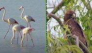 Gittiğinizde Kendinizi Adeta Masal Dünyasında Hissedeceğiniz Flamingo Cenneti: Tuz Gölü