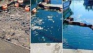 İstanbul Üniversitesi'nden Önemli Çalışma: Müsilajı 5 Günde Temizlediler!