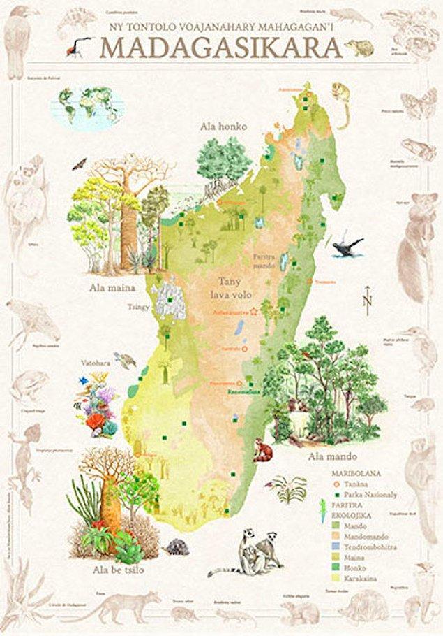 24. Madagaskar'da 7 adet ekolojik bölge vardır.
