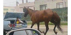 Tepki Çeken Görüntüler: Atı Aracın Arkasından Kilometrelerce Koşturdular