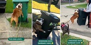 En Büyük Hobisi Çöp Kovası Devirmek Olan Rahatsız Köpek