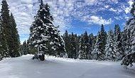 Uludağ'ı Ziyaret Ettiğinizde Bu Ağaçlara Selam Vermeyi Unutmayın: Kestane ve Uludağ Göknarı Sizi Bekliyor!