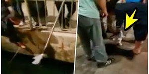 Denize Düşen Kediyi Kurtarmak İçin Seferber Olan Vatandaşların Kurtarma Operasyonu