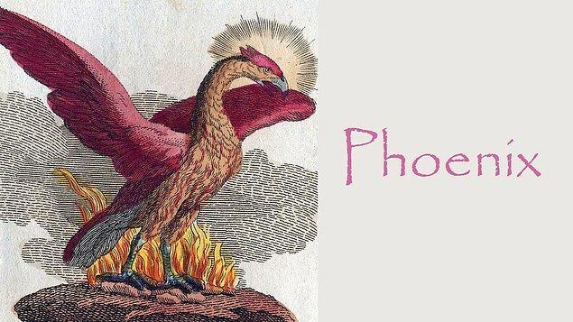 Yunan mitolojisinde yunus dahil birçok hayvan simgesel olarak kabul edilse de ülkenin sembolü Anka kuşu.