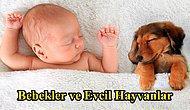 Bebeklerin Evcil Hayvanla Büyümesinin Faydaları