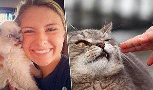 Sefil İnsan Irkının Kendisine Gösterdiği Sevgi Eylemlerine Katlanamayan 19 Asil Kedi