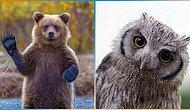 Dünyaya Bir Daha Gelsen Hangi Hayvan Olurdun?