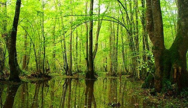 1. Tüm doğaseverlerin en büyük arzusu dünyaya yeşillikler, ormanlar bırakmaktır. Hatta evet her birimizin en büyük arzusu da bu olmalıdır...