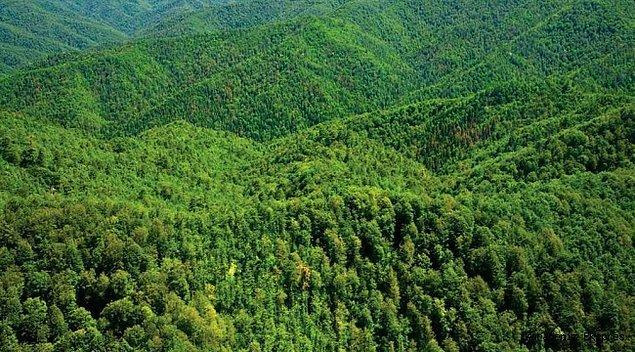 4. Toprak ve iklimin yanı sıra her bölgenin kendine özgü bir ekosistemi var.