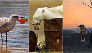 Bizim Elimizde! 8 Maddede Neden Tüm İnsanların Ekoloji Hakkında Bilgi Sahibi Olması Gerektiğini Anlatıyoruz!