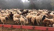 İstanbul'da 90 Milyon Liralık İcralık Araba Dolandırıcılığı! Paralarla Hayvan Çiftliği Kurmuşlar