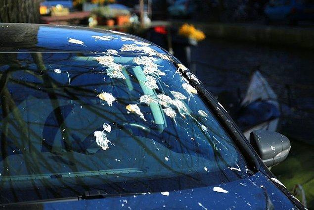 10. Kuş pisliği, böcek kalıntısı gibi lekeleri nemli veya sabunlu bez ile temizleyin.