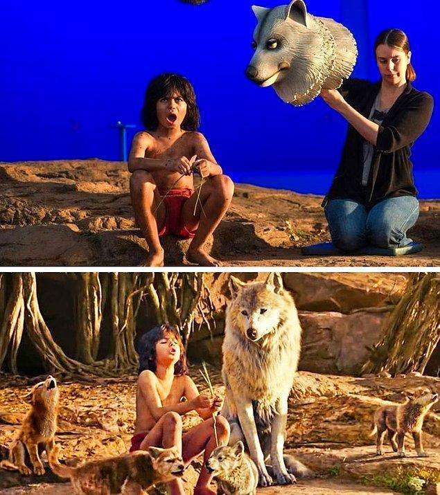 8. The Jungle Book'un yeni versiyonunda, Mowgli'yi yetiştiren dişi kurdun gerçekte bu şekilde görünüyormuş.