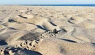 Patara'nın Çalınan Kumları: Tutanak Tutan Memur İkinci Kez Görevden Alındı