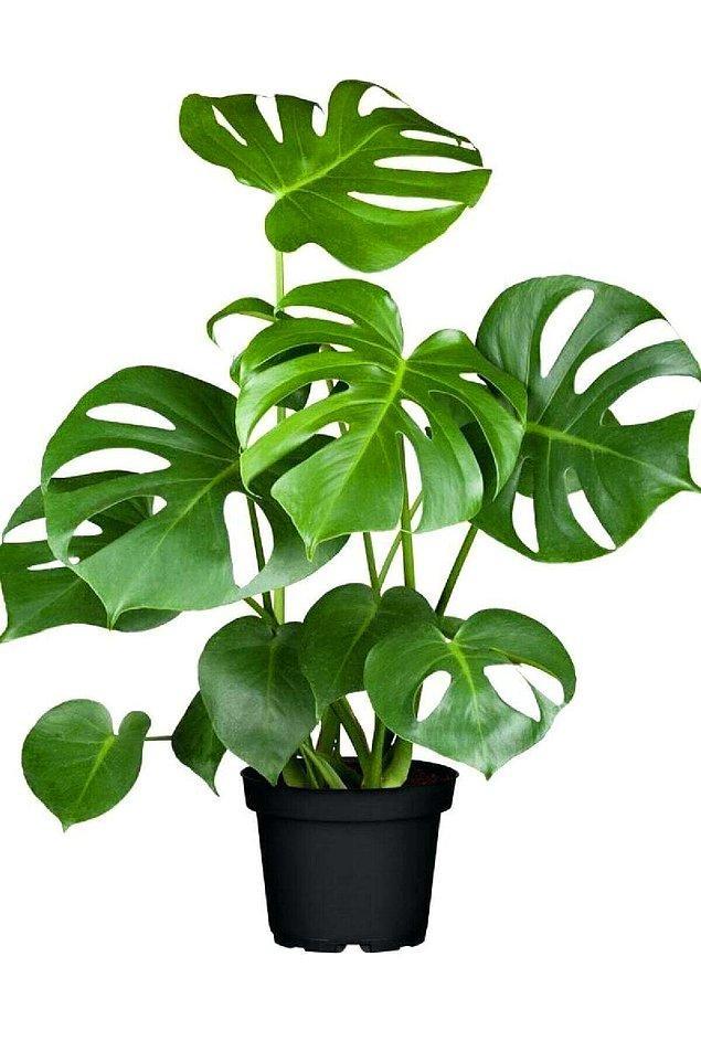 4. Salon bitkileri evlere doğayı taşıyor.