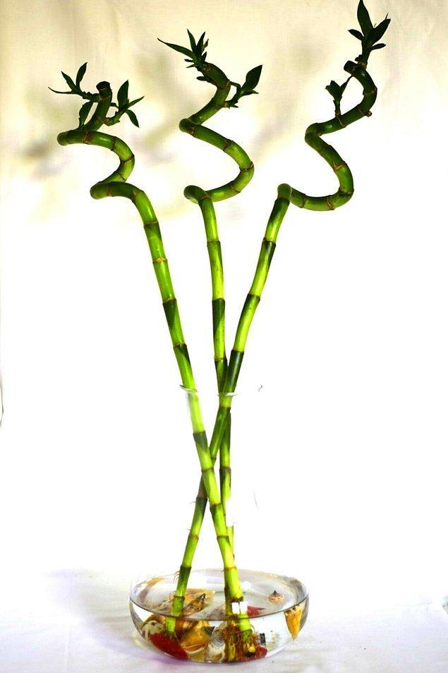 1. Bambu