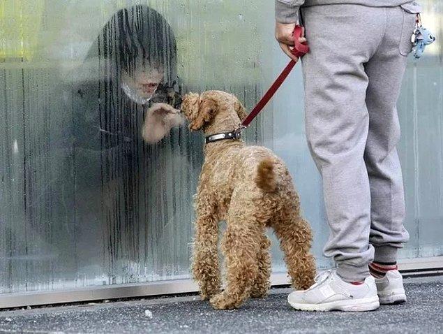 2. 2011 yılında Japonya'da gerçekleşen Fukuşima Nükleer Santrali kazası sonrası geçici olarak karantinaya alınan bir çocuk, aralarındaki cama rağmen köpeğiyle oynuyor.