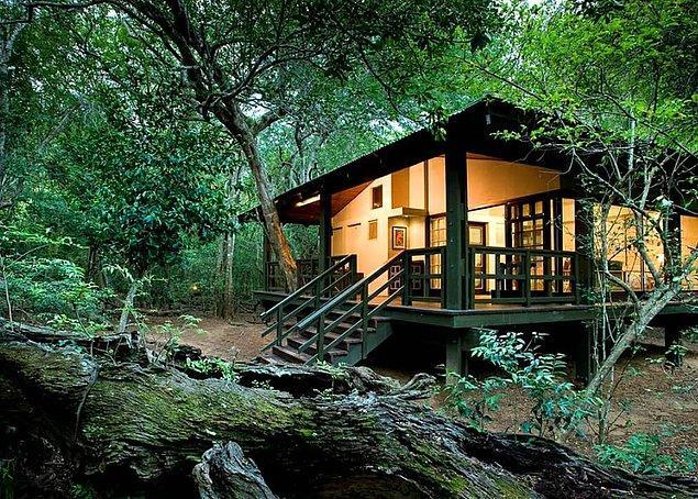 5. Phinda Forest Lodge - Güney Afrika