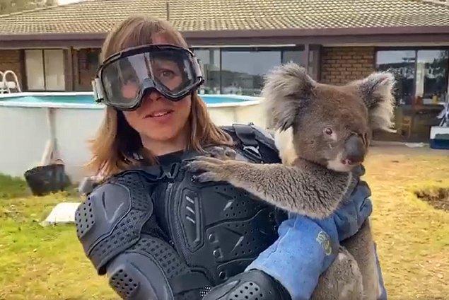 """14. """"Avusturalyalılar, koalaların 'drop bear' isminde genetik akrabaları olduğunu ve bu canlıların, turist ölümlerinin %82'sine neden olduğunu ısrarla savunuyorlar."""""""