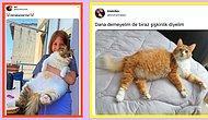 'Dana Kedi Kontrolüne' Takılan Twitter Kullanıcılarından Gördüğünüz Anda İçinizi Isıtacak 17 Kare😍