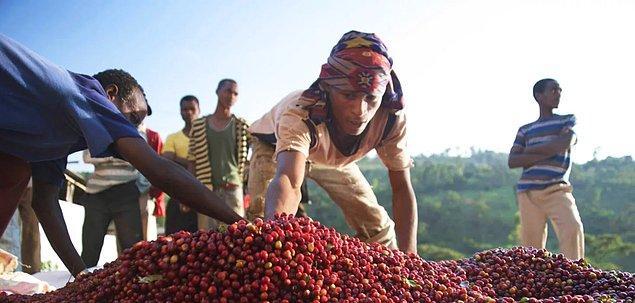 2. Kahvenin keşfi milattan önce 800'lere dayanıyor.