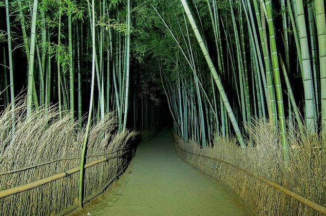 23. Ünlü bambu ormanı akşam geç saatlerde böyle görünüyor.👇