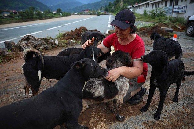 Su basan barınakta 25 köpek kurtarıldı