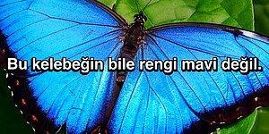 Daha Önce Düşünmeseniz de Bir Kere Duyunca Aklınızı Alacak Soru: Doğada Neden Çok Az Mavi Renk Var?