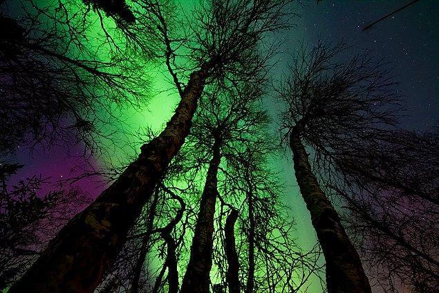 12. Genellikle ışıklar ortalama olarak 30 ile 60 dakika arasında görülmektedir.