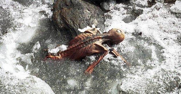 2. 1991 yılında Avusturya-İtalya sınırındaki bir dağ geçidinde gezen iki Alman turist, tamamen buz kaplı bir ceset bulunca hemen polise haber verdiler. Neredeyse 4 bin yıldır oradan olan bilinen en eski doğal mumya Ötzi de böylece keşfedilmiş oldu.