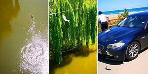 Sadece Türkiye'de Yaşanabilecek Bir Olay: Balığa Araba Çarptı