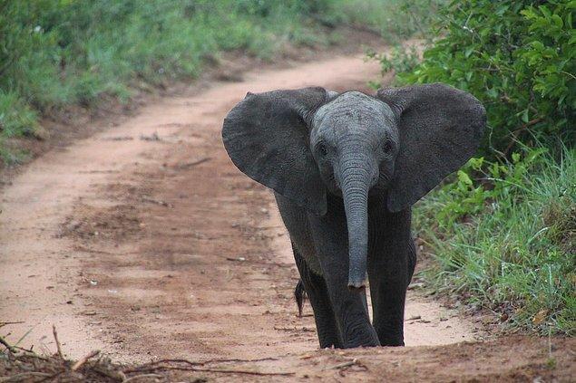 """9. """"Güney Afrikalılar sanıldığı gibi okula veya işe giderken fillere ya da aslanlara binen aşırı kaslı insanlar değil! Ayrıca çamurdan yapılmış kulübelerde yaşamıyoruz."""""""