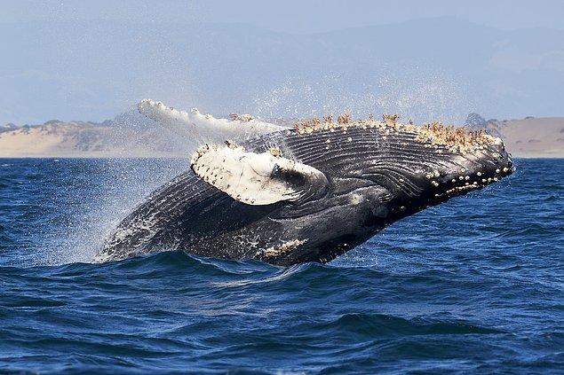 """1. """"Olay sırasında ne yaşadığınızı anladınız mı? Yani bir balinanın ağzının içinde olduğunuzu fark etmiş miydiniz?"""""""