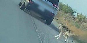 Sahibi Tarafından Yol Kenarına Bırakılan Köpeğin İçinizi Burkacak Görüntüleri