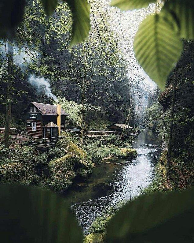 7. Ormanın derinliklerinde...