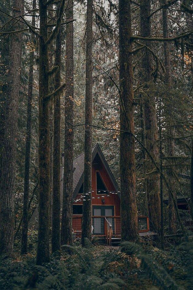 44. Kanada'daki bir ormanda bulunan bu küçük kabin.