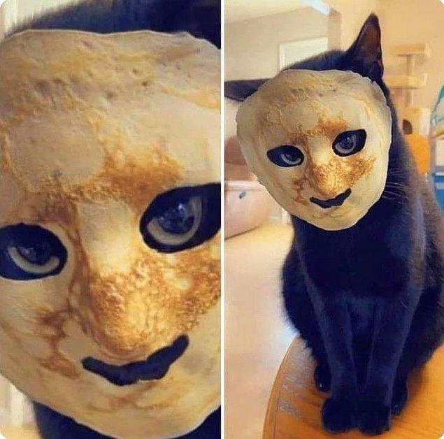 """6. """"Sevimli olacağını düşündüğünüz için kedinizin yüzüne pancake koyarsınız ama oluşan şey rüyalarınıza girer."""""""