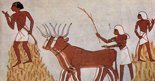 Mısırlılar kurban edilen hayvanın kanını alınlarına, yüzlerine ve vücutlarının diğer yerlerine sürdükleri de biliniyor. Akan o kanların günahlarını temizlediklerine ve bu kanı alınlarına sürünce günahsız kalacaklarına inanıyorlardı.