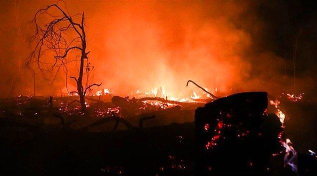 2010 Bolivya Orman Yangını, Bolivya
