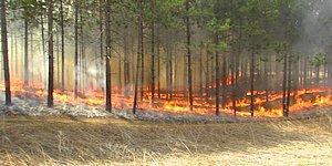 """""""Ciğerlerimiz Yanmıyor"""" Çünkü Akdeniz ve Ege'deki Ormanların Zaten Yanması mı Gerekiyordu?"""