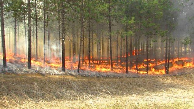 Kaza sonucunda çıkan yangınlar, yüzde 5'i kapsıyor.