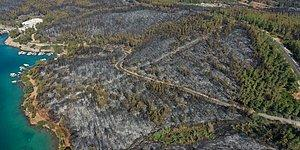 80 Hektar Alan Kül Oldu: Bodrum'daki Yangının Boyutları Gün Ağarınca Ortaya Çıktı